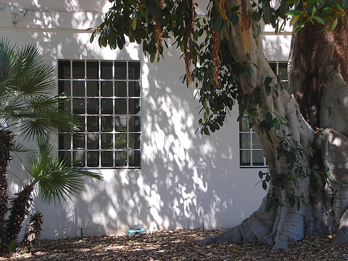 Trees outside building