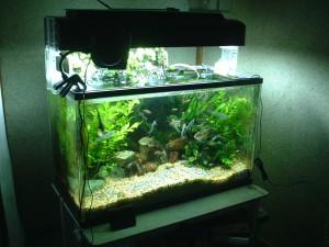 Rectangular Feng Shui Aquarium