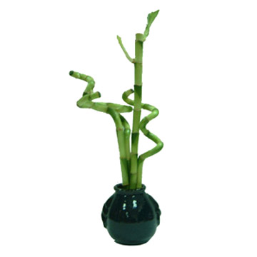 Feng Shui for Education Luck - Lucky Bamboo