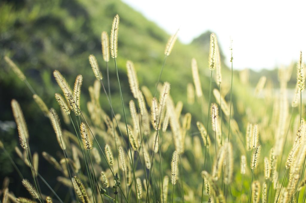 Gua 4 Characteristics - Grass